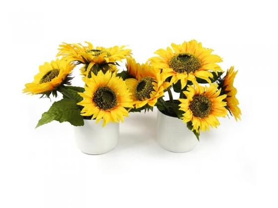 Sunflowers in White Vases main image