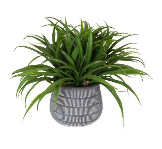 Plant In Grey Pot main image