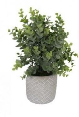 Plant In Grey Pot main image