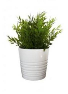 Plant In White Pot