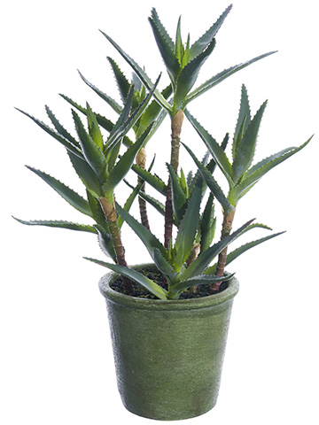 "16""AGAVE PLANT main image"