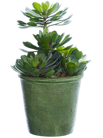 """11.5""""ECHEVERIA PLANT IN POT  main image"""