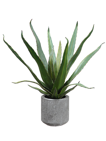 "19""AGAVE IN CEMENT POT main image"
