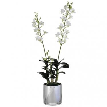 30 Inch Tall Dendrobium Orchid Plant in Glass Vase main image