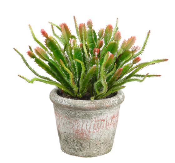 Cactus in Clay Pot  Green & Burgundy main image