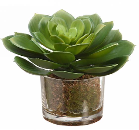 Echeveria in Glass Vase  Green main image