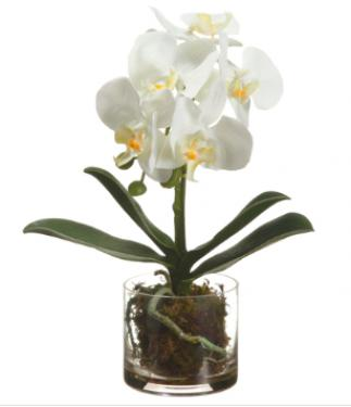 "13"" Phalaenopsis Orchid Plant in Glass Vase White main image"