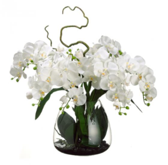 Phalaenopsis Orchid in Glass Vase C main image
