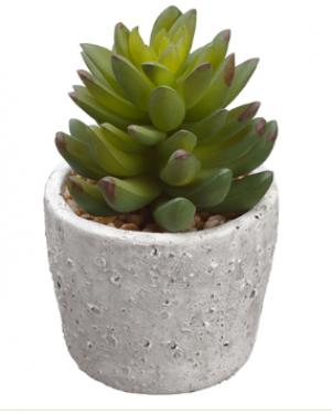 Sempervivum in Cement Pot Green main image