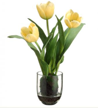 Tulip in Glass Vase Yellow main image