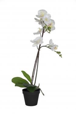 Black Pot & White Orchid main image