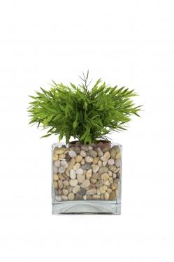 Plant with Rocks main image