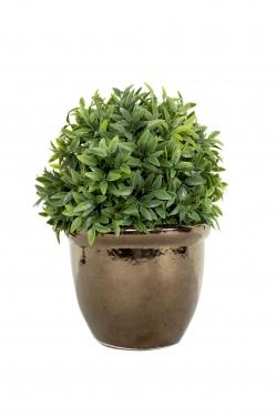 Plant with Copper Pot main image