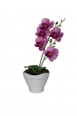Purple Orchid  main image