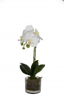 White Orchid & Glass Vase main image