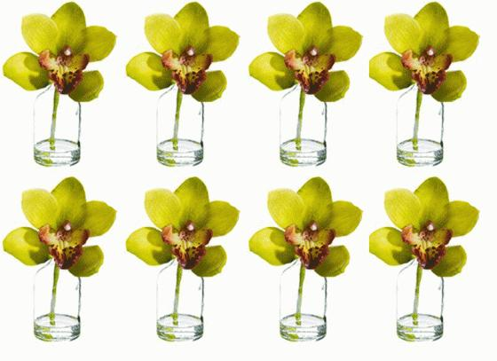 "7"" CYMBIDIUM IN GLASS VASES main image"
