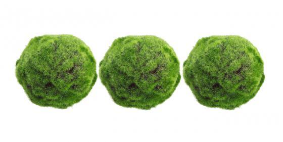 "5"" Moss Balls main image"