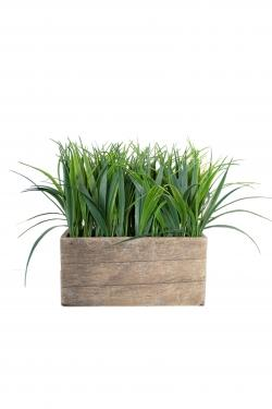 Box Potted Plant  main image