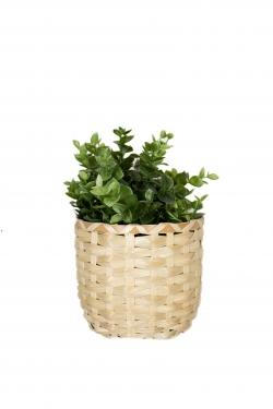 Plant in Small Basket  main image