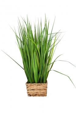 Grass Plant & Basket main image