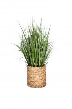 Basket & Grass Plant main image