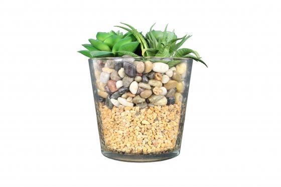 Succulents & Rocks  main image