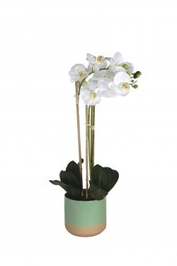 Green Vase & White Orchid main image