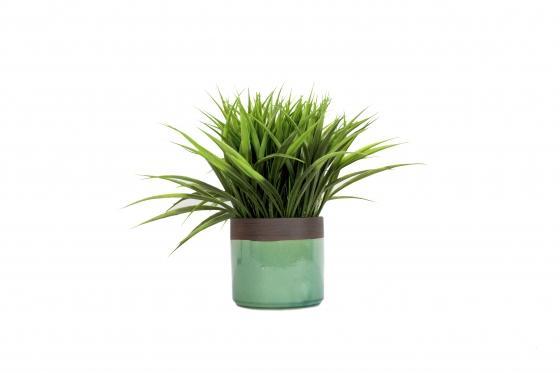 Grassy Plant & Green Pot main image