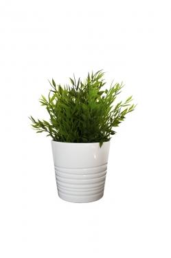 Small Potted Plant main image