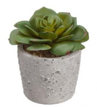 Echeveria in Cement Pot   main image