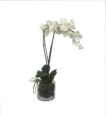 White Orchids main image