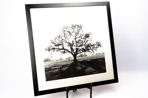 B & W Single Tree Wall Art main image