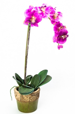 Pink Orchid main image
