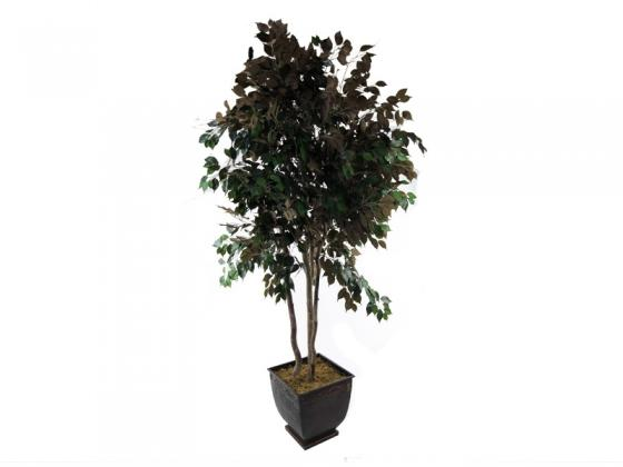 Green and Brown Tall Tree Plant main image
