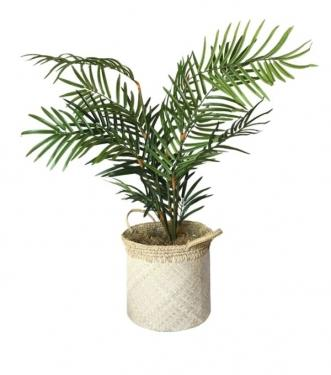 Floor Palm in Basket main image