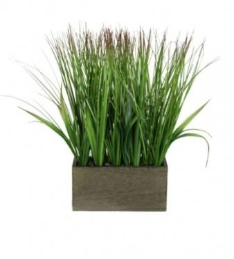 Grass Plant in Grey Box main image