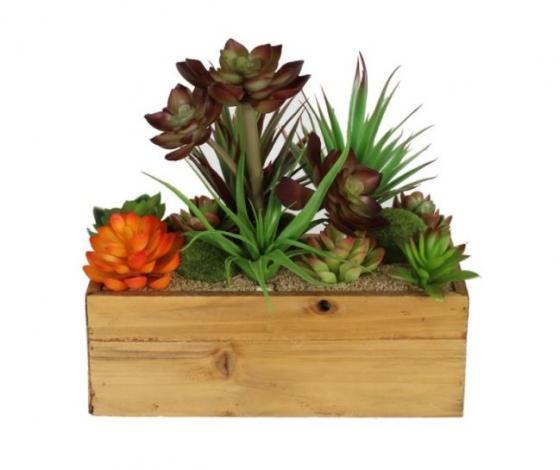 Succulent Box Plant main image