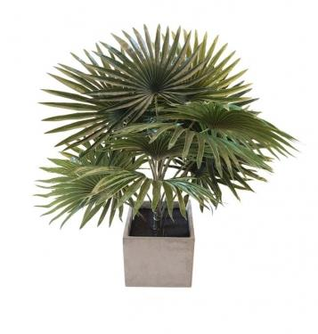 Palm Plant In Square Concrete Planter main image