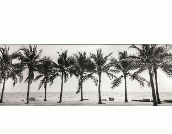 B&W Palm Trees Art main image