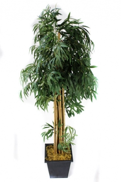 8ft. Bamboo in Square Black Pot main image