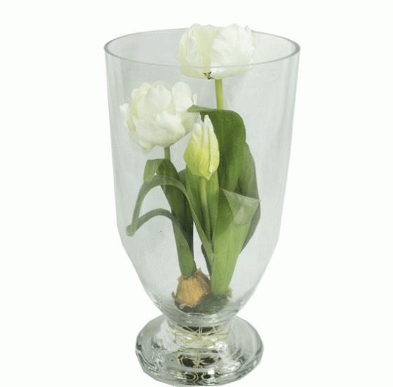 Glass Vase with Tulip Bulbs main image