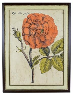 Rose Fresco Art main image