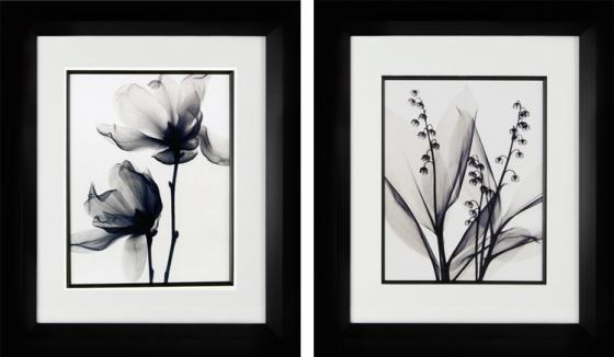 Black and White Spring Flowers main image