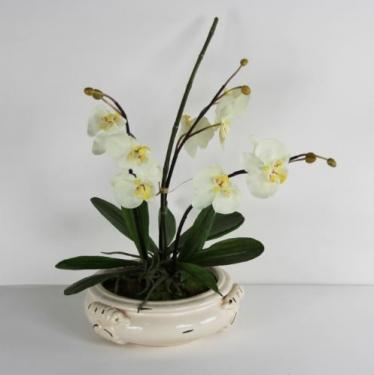 White/Yellow Orchids in Cream Vase main image