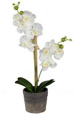 White Orchid  main image
