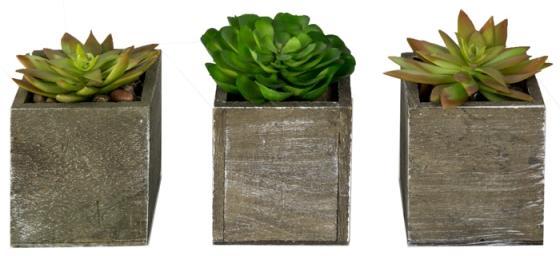 Faux Succulents main image
