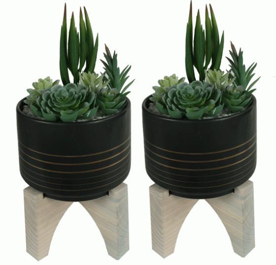 Succulent Garden in Raised Pot  main image