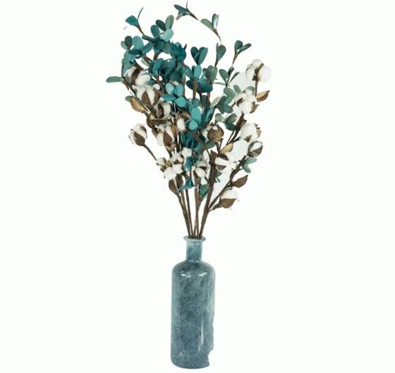 Blue Cottonwood  main image