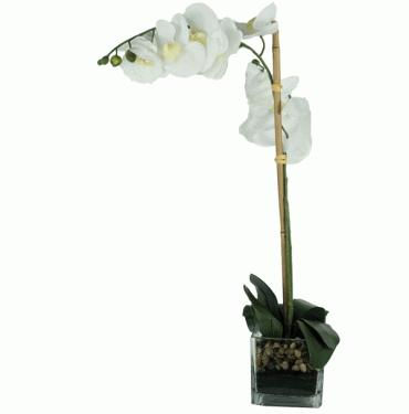 Orchid in Glass Pot  main image