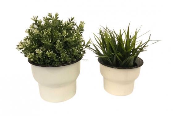 Set of 2 Plants main image